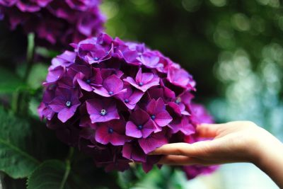 יד, פרחים, נגיעה