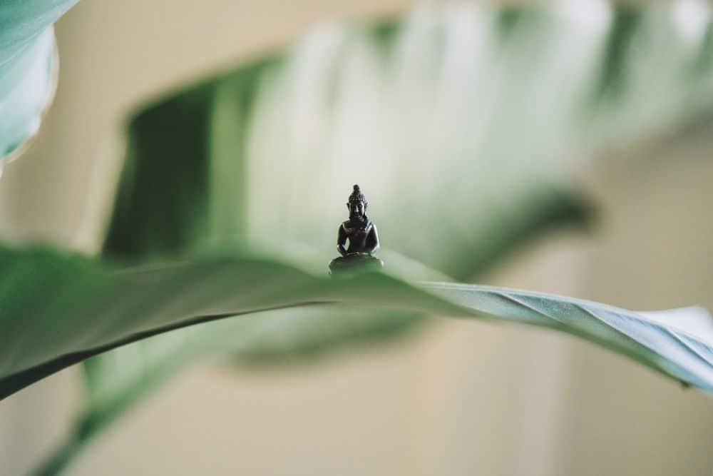 בודהה, עלה ירוק