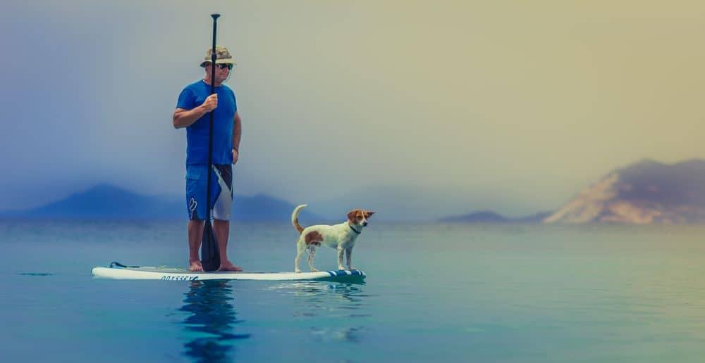 כלב, חסקה, ים