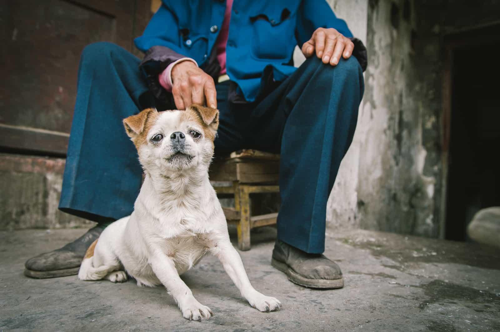 כלב, בעלים, סין