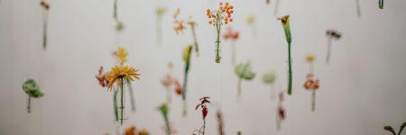 פרחים, מבחנות