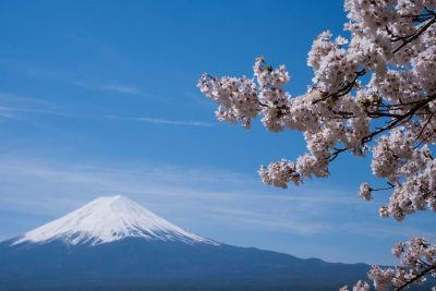 הר פוג'י, יפן, דובדבנים, פריחה