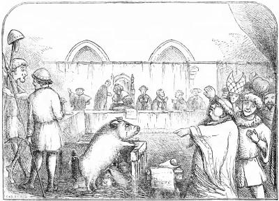 משפט, חזירה, חזרזירים, לאווני