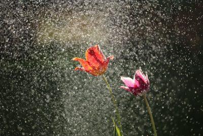 גשם, פרחים