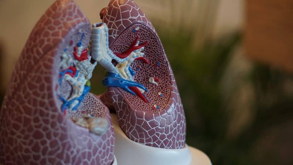 ריאות, דגם רפואי