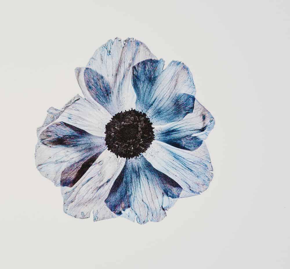 פרח, צבעי מים, נורית