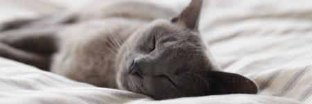 חתול אפור, חתול ישן