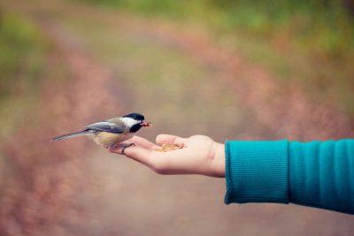 יד, ציפור, האכלה, נדיבות