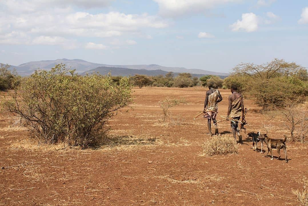 הדזה, טנזניה, ציידים לקטים, ציד