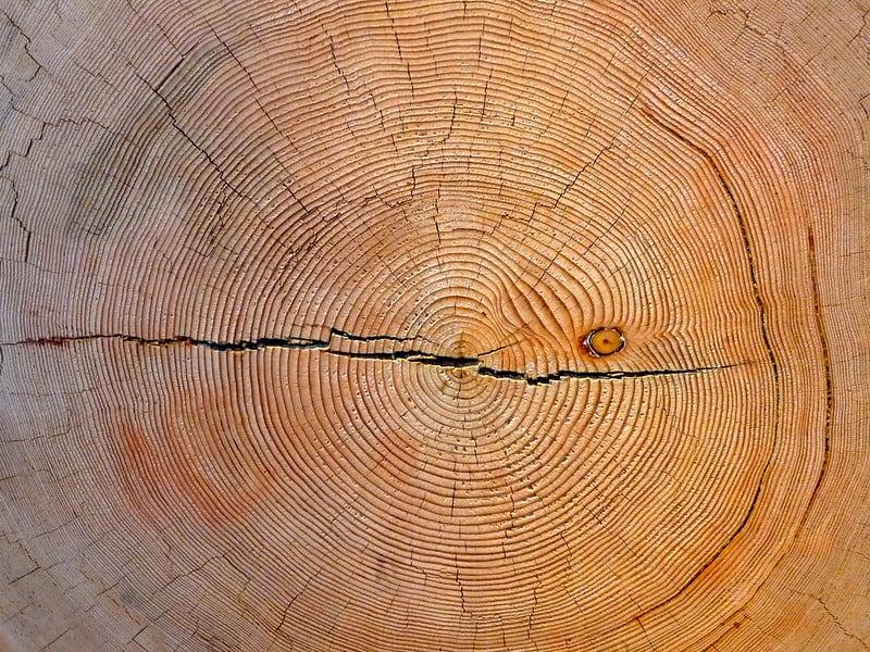 טבעות עצים