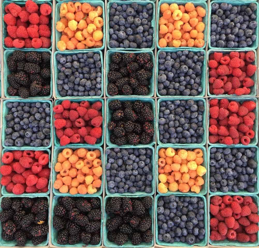 תותי יער, תותי בר, פטל
