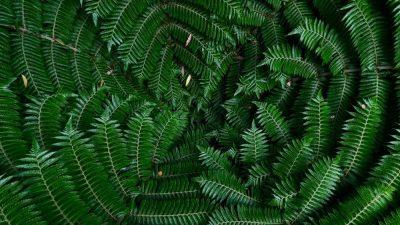 עץ, ניו זילנד