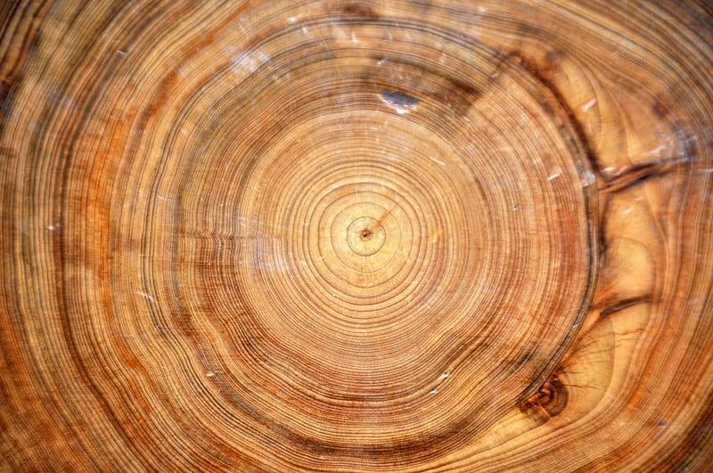 עץ, ברוש קירח, טבעות