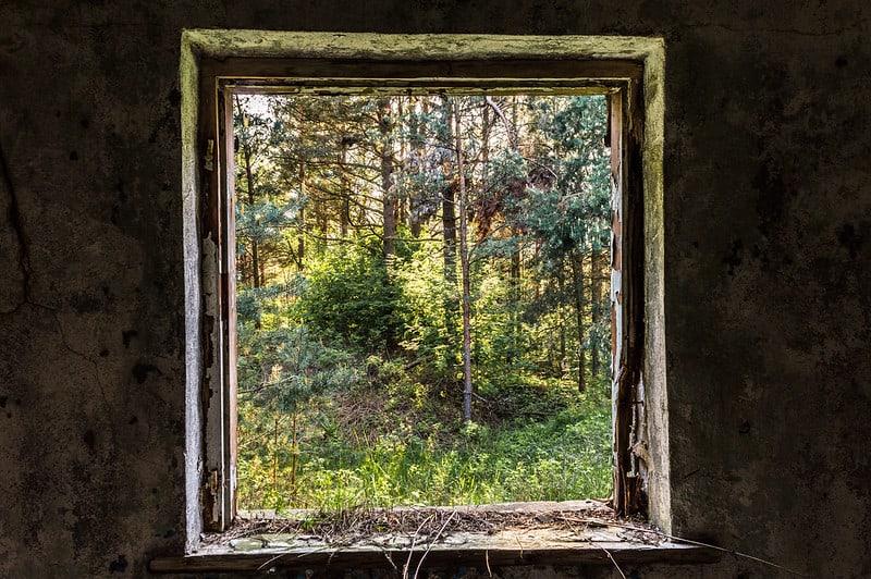 חלון, נוף, יער