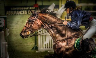 סוס, רוכב