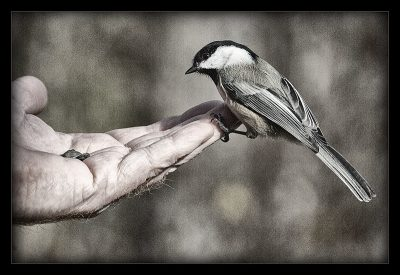 ציפור, כף יד, גרעינים