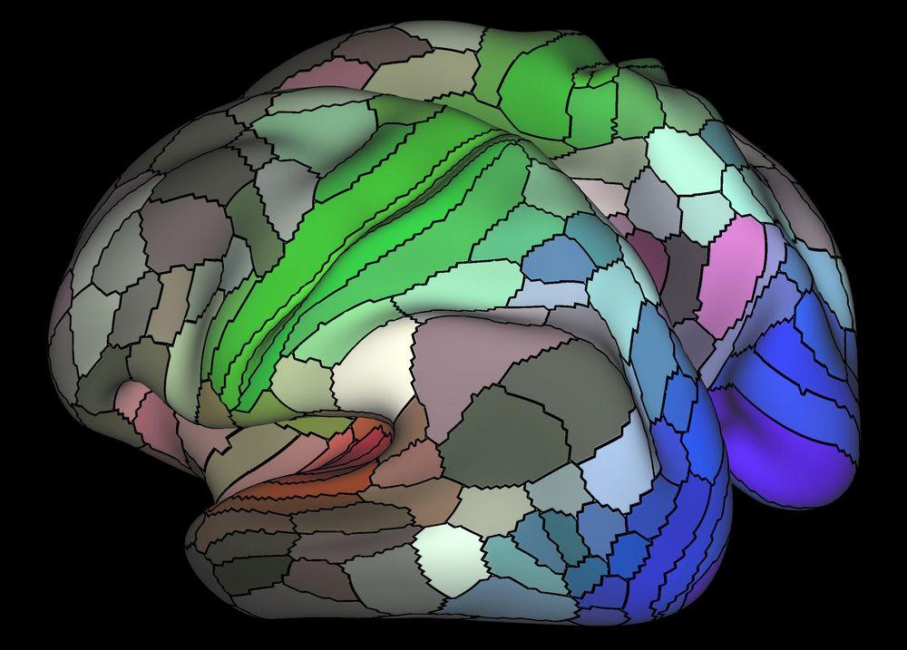 קליפת המוח