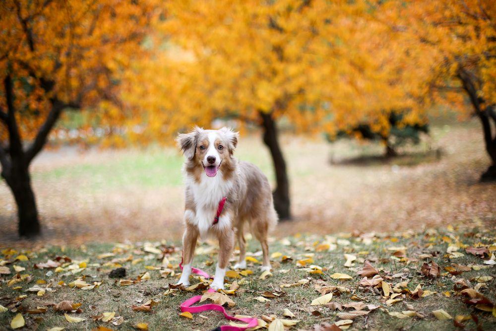 כלב, סנטרל פארק