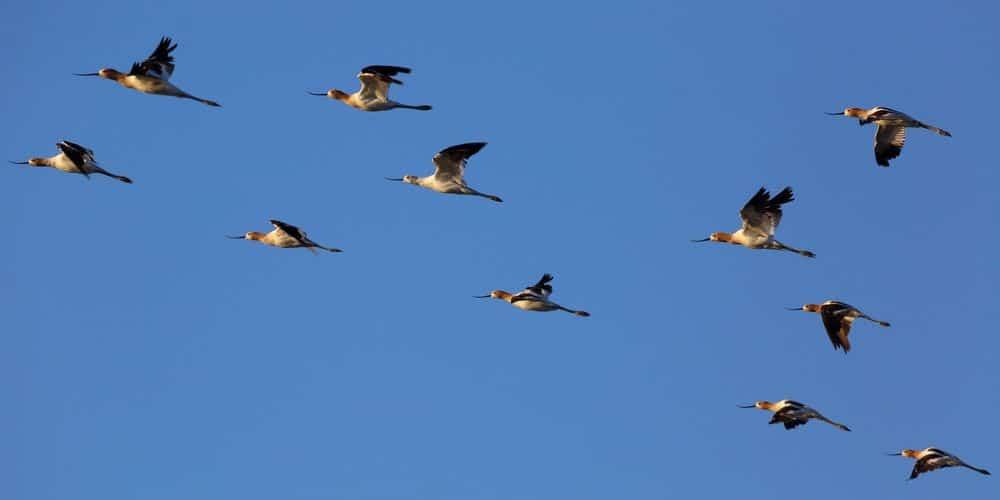 ציפורים נודדות, להקה