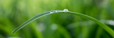דשא, עלה, טיפות