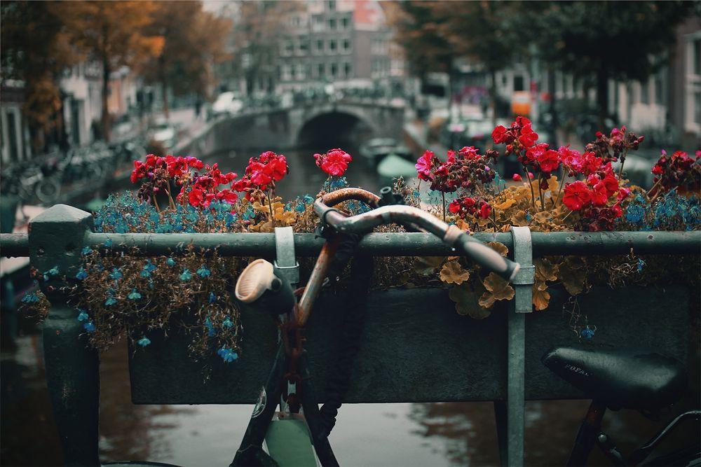 אמסטרדם, פרחים, תעלה, אופניים