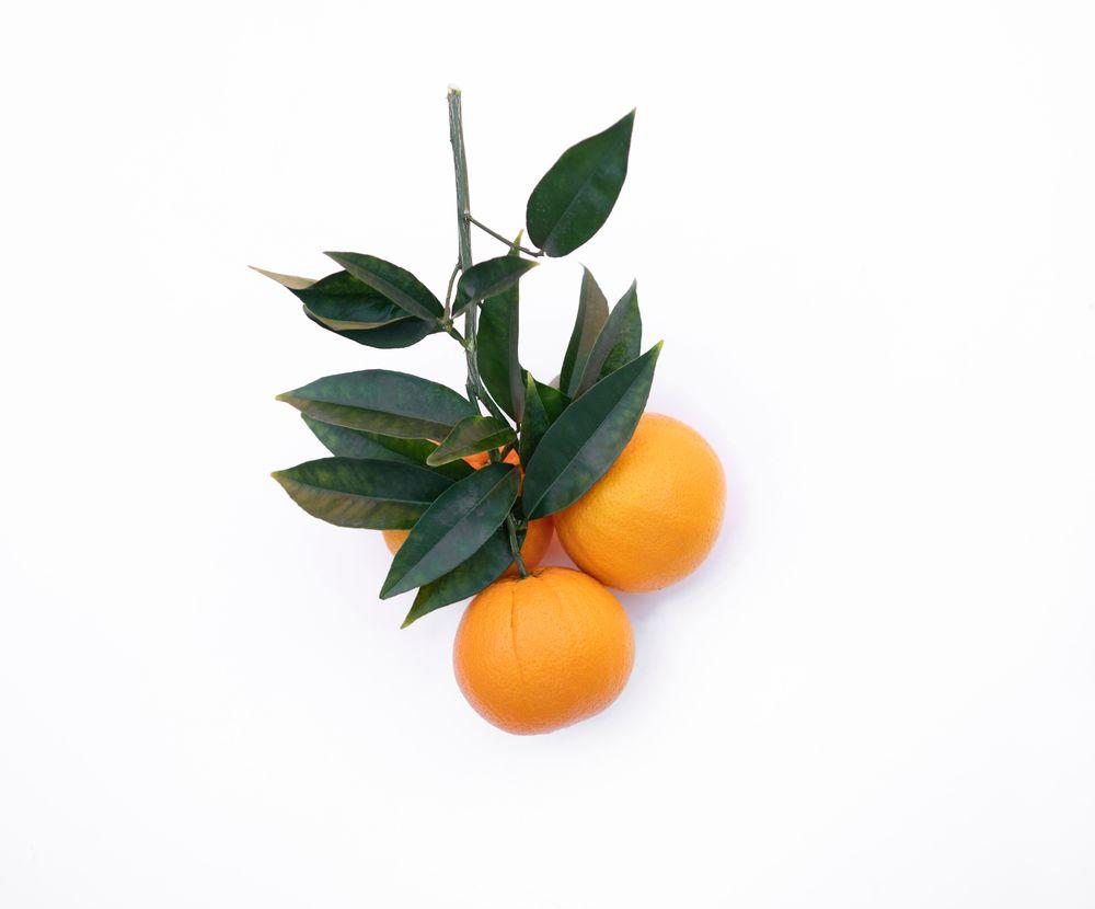 פרי הדר