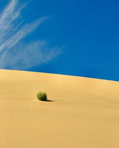 דיונה, חול, שיח, שמיים