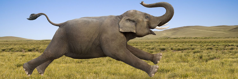 Wild tusk-less elephant mural