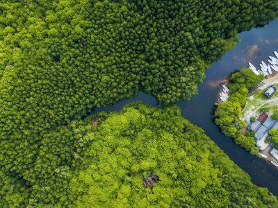 מנגרוב, אינדונזיה