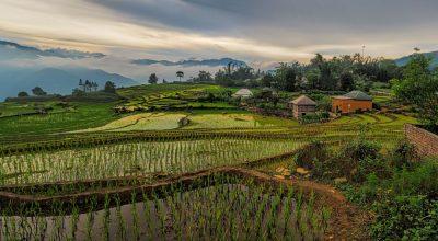 שדות אורז, וייטנאם