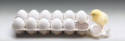 אפרוח, ביצים, קרטון ביצים
