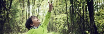 ילד, ירוק, יער, מצביע