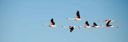 פלמינגו, צ'ילה, ציפורים, שמורת טבע