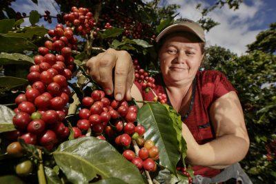 קפה, אל סלבדור, קואופרטיב