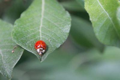 מושית, חיפושית, פרת משה רבנו