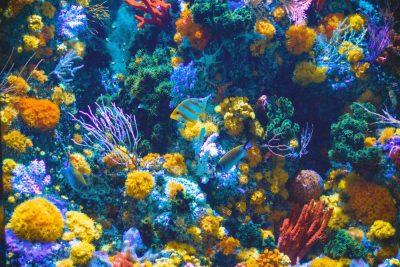 אלמוגים, דגים, חיים תת-ימיים