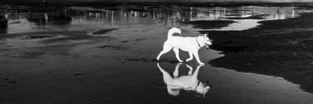 כלב, חוף הים, השתקפות