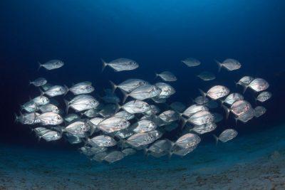 להקת דגים, ניווט