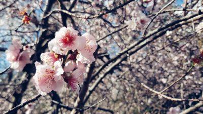פריחה, עדינות, פרחים