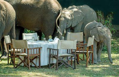 פילים, שמורת טבע, מסאי מארה