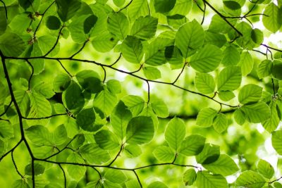 ירוק, עצים, עלים