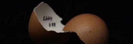 ביצים, קליפה, שברים