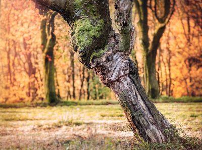 פארק, עץ, גזע, וינה