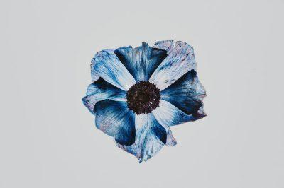 נורית, פרח, ציור