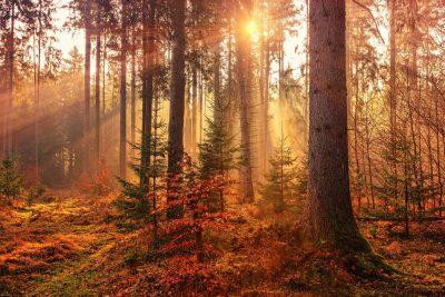 יער, סתיו, שלכת, שמש