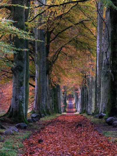 שביל, עלים, יער, עצים, שלכת