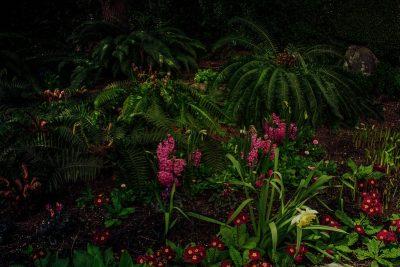 גינה, פריחה, פרחים, עציצים