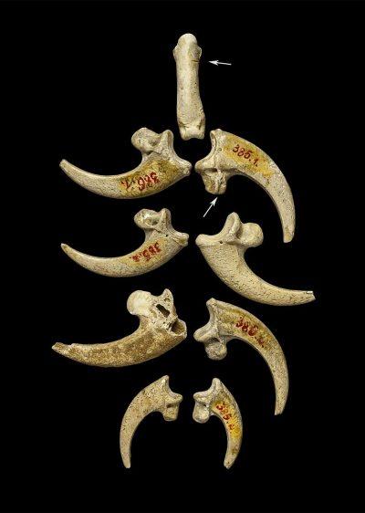נשר לבן-זנב, קרואטיה, ניאנדרטלים, תכשיטים