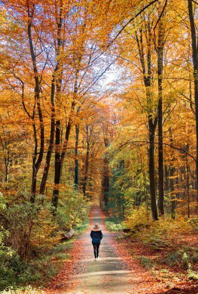 יער, הליכה, בלגיה, שלכת