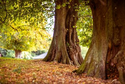 יער, חורשה, עצים, ירוק, אור